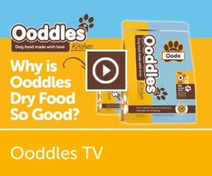 Ooddles TV